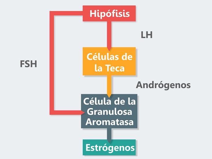 Sistema endocrino y reproducción femenina | Asociación Educar para ...