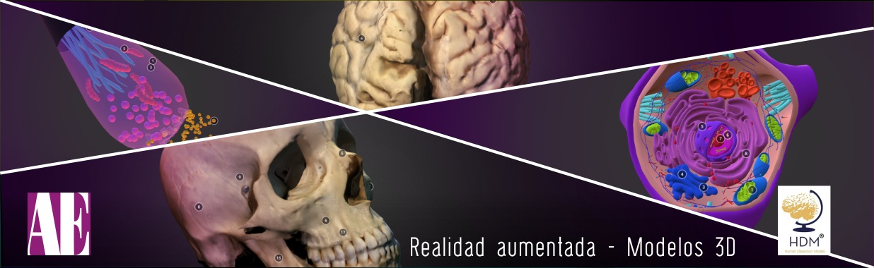 Realidad aumentada - Modelos 3D   Asociación Educar para el ...