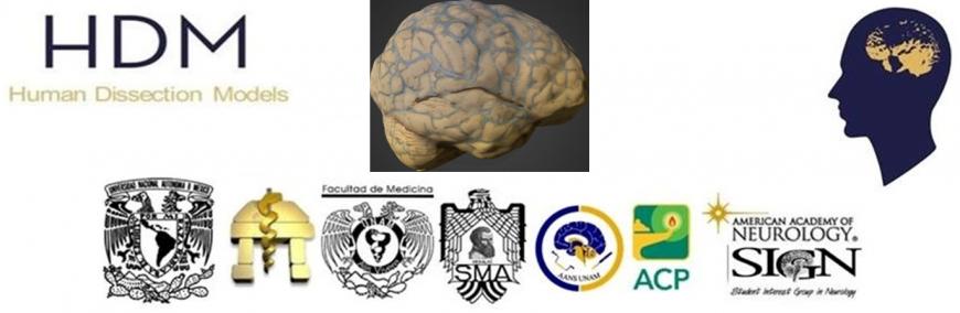 Modelo 3D: Vascularización cerebral | Asociación Educar para el ...